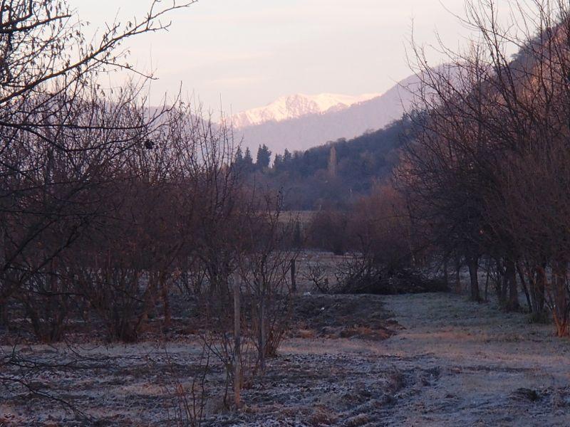 Morning vista