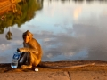 Monkey at Angkor Wat