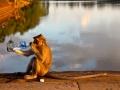 Monkey at Angkor Wat