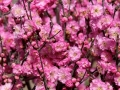 Spring is in full bloom