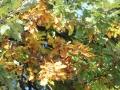 More autumn