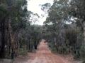 Aussie bush