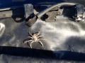 Spider at Cocklebiddy