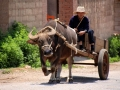 Man and his cart