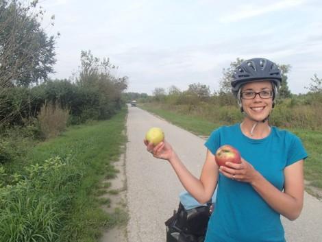 Katie apples