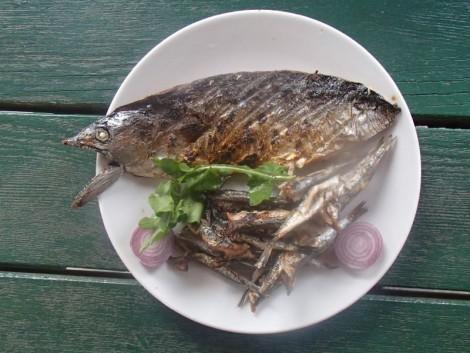 Fresh barbecued Mackerel
