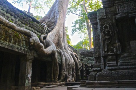 Ta Prohm temple. AKA Tomb Raider temple.