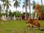 Nong Khai to Don Det